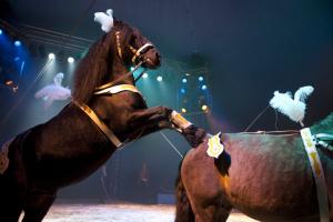 Circus van Sinterklaas, 1 voorstelling: 15.00 u. @ GOUDasfalt
