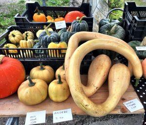 Slow Food Groene Hart Oogstmarkt @ GOUDasfalt